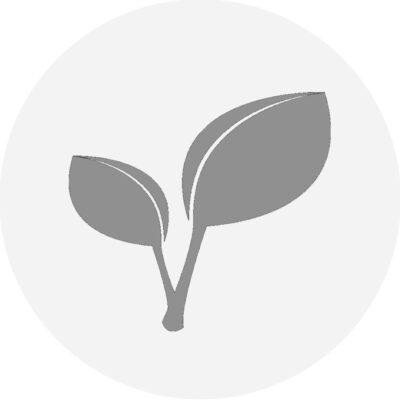 essenzielles_Schlank mit Intervall-Essen_veg Zusatzrezepte